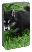 Concern Expressed On The Face Of An Alusky Pup Portable Battery Charger