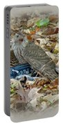 Cooper's Hawk - Accipiter Cooperii - With Blue Jay Portable Battery Charger