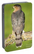 Cooper's Hawk In The Backyard Portable Battery Charger