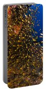 Coral Reef And Diver  Portable Battery Charger