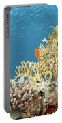 Coral Reef Eco System Portable Battery Charger