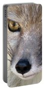 Corsac Fox- Vulpes Corsac 02 Portable Battery Charger