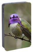 Costa's Hummingbird, Solano County California Portable Battery Charger