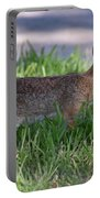 Cottontail Rabbit In My Front Yard Portable Battery Charger