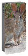 Cottontail Rabbit Surprised To Have Company Portable Battery Charger