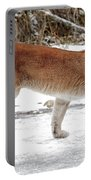 Cougar On The Prowl Portable Battery Charger