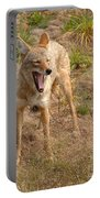 Coyote Caught In A Yawn Portable Battery Charger