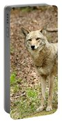 Coyote In Cades Cove Portable Battery Charger