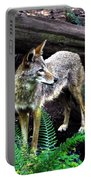 Coyote In Mid Stream Portable Battery Charger