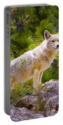 Coyote In The Rocky Mountain National Park Portable Battery Charger