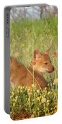 Coyote Pups Portable Battery Charger