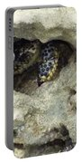 Crab Hiding In A Rock On The Seashore Portable Battery Charger