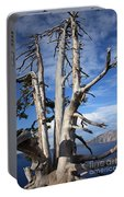 Crater Lake Tree Portable Battery Charger