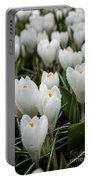 Crocuses 6 Portable Battery Charger