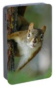 Curious Alaskan Red Squirrel Portable Battery Charger