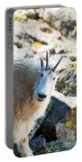 Curious Goat On The Mount Massive Summit Portable Battery Charger