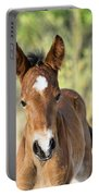 Curious Little Colt  Portable Battery Charger