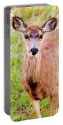 Curious Mule Deer Frolicking On A Colorado Spring Afternoon Portable Battery Charger