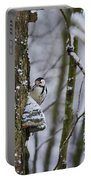 Curious White-backed Woodpecker Portable Battery Charger