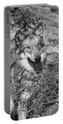 Curious Wolf Pup Portable Battery Charger