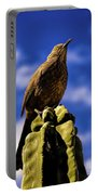 Curved Billed Thrasher Portable Battery Charger