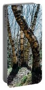 Curved Birch Tree Portable Battery Charger
