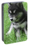 Cute Alusky Puppy Dog Sitting In Green Grass Portable Battery Charger