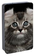 Cute American Curl Kitten With Twisted Ears Isolated Black Background Portable Battery Charger