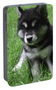 Cute Fluffy Alusky Puppy Sitting Up In A Yard Portable Battery Charger