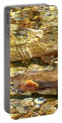 Cutthroat Trout In Clear Mountain Stream Portable Battery Charger
