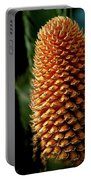 Cycad Cone Portable Battery Charger