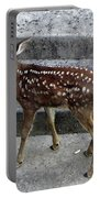 D-a0069 Mule Deer Fawn On Our Property On Sonoma Mountain Portable Battery Charger