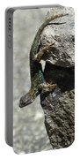 D7b6335 Western Fence Lizard, Male, Sonoma Mountain, Ca Portable Battery Charger