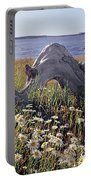 136236-daisies And Driftwood  Portable Battery Charger