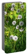 Dandelions On The Maryland Appalachian Trail Portable Battery Charger