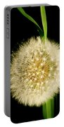 Dandelion's Seed Head. Portable Battery Charger