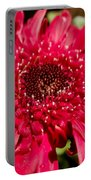 Dark Red Gerbera Daisy Portable Battery Charger