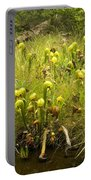 Darlingtonia Plants Grow Beside Portable Battery Charger