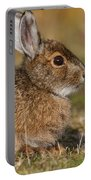 Ddp Djd Snowshoe Hare 98 Portable Battery Charger