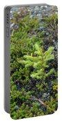 Ddp Djd Spruce Seedling 16 Portable Battery Charger