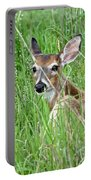 Deer Bedded Down During Mid Day Portable Battery Charger