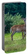 Deer In A Hay Field Portable Battery Charger