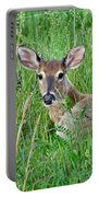 Deer Laying In Grass Portable Battery Charger