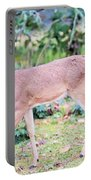 Deer45 Portable Battery Charger