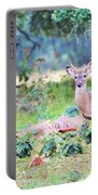 Deer50 Portable Battery Charger