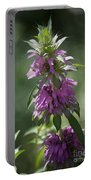 Delicate Desert Flower Portable Battery Charger