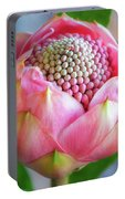 Delicate Pink Bud Waratah Flower Portable Battery Charger