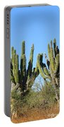 Desert Cacti In Cabo Pulmo Mexico Portable Battery Charger