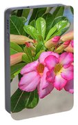 Desert Rose Or Chuanchom Dthb2106 Portable Battery Charger