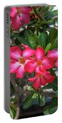 Desert Rose Or Chuanchom Dthb2107 Portable Battery Charger